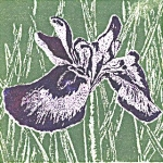 Iris 2 (unframed image size: 10cmx10cm)