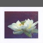 Lotus (unframed image size: 12cmx15cm)